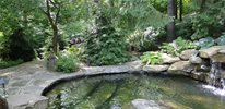Woodland Swimming Pond