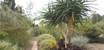 Coast Aloe & Aeonium
