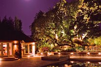 Tree, Oak, Lights, Pool Mediterranean Landscaping Aesthetic Gardens Mountain View, CA