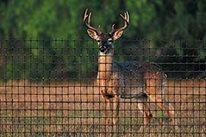 Deer Fencing Hoover Fence Co. ,