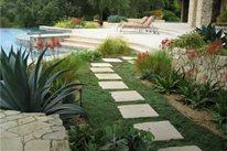 Custom Swimming Pools