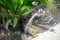 Broken Sprinkler A-Plus Sprinkler and Landscape Crestline, CA