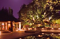 Tree, Oak, Lights, Pool Lighting Aesthetic Gardens Mountain View, CA