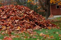 Rake Leaves Pile Landscaping Network Calimesa, CA