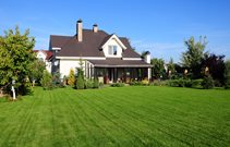 Cost of a Seed Lawn