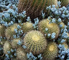desert succulents