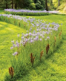 Newsletter Picture Landscaping Network Calimesa, CA