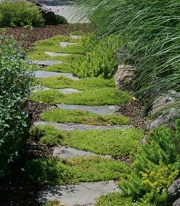 Add Plants to Your Pathway