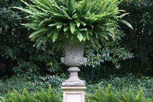 Pedestal, Urn, Victorian, Fern Backyard Landscaping Donna Lynn Landscape Design Santa Barbara, CA