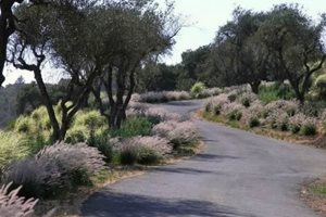 Driveway Michelle Derviss Landscape Design Novato, CA