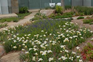Lawns, Native Plants Retaining and Landscape Wall Janine Robinson ,
