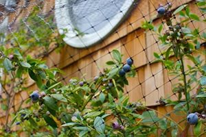 These Blueberries Are A Sweet Surprise Retaining and Landscape Wall Janine Robinson ,