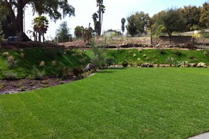 Backyard Landscaping Costs - Landscaping Network