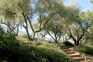 Huettl Landscape Architecture Walnut Creek, CA
