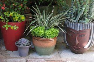 Mayita Dinos Garden Design Los Angeles, CA