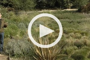 Video Landscaping Network Calimesa, CA