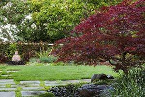 Asian Garden, Buddha, Japanese Maple Swimming Pool Shepard Design Landscape Architecture Greenbrae, CA
