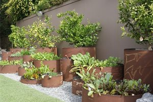 Pipe Planters Swimming Pool Z Freedman Landscape Design Venice, CA
