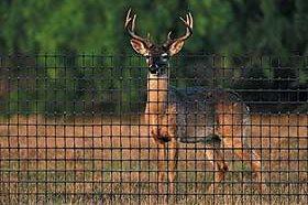 Deer Fencing Hoover Fence Co.