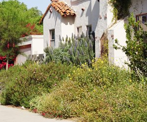 Hot Walk Maureen Gilmer Morongo Valley, CA