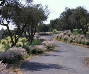 Michelle Derviss Landscape Design Novato, CA