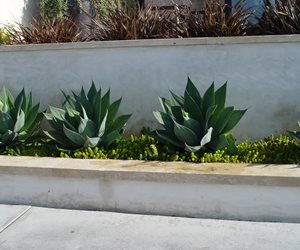 Plaster Block Wall Walkway and Path Maureen Gilmer Morongo Valley, CA