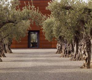 Olive Trees, Mediterranean Landscaping Andrea Cochran Landscape Architecture San Francisco, CA