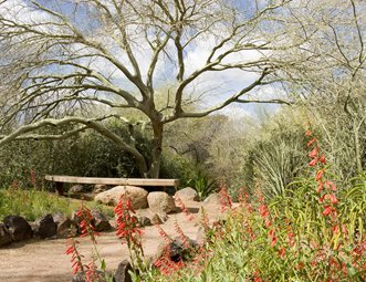 Arizona Garden, Desert Tree, Desert Plants Garden Design Landscaping  Network Calimesa, CA