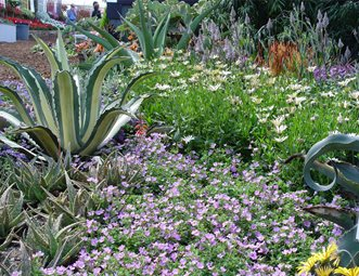 groundcovers for slope garden design maureen gilmer morongo valley ca