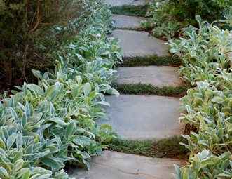 Lambs Ear, Bluestone Path Walkway And Path Stout Design Build Los Angeles,  CA