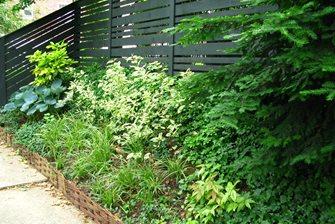 Variegated Perennials
