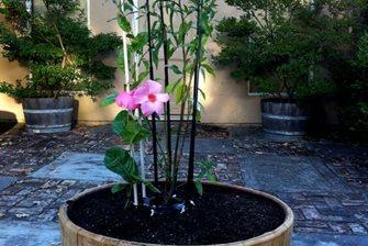 adjustable plant cage