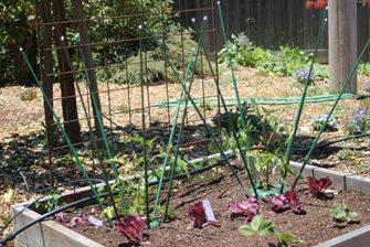extendable plant cage