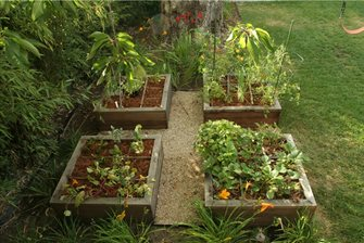 Raised beds for growing vegetables.