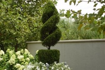 Topiary, French, Box, Pea Gravel