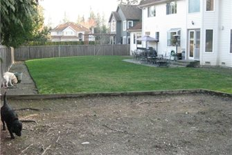 backyard before renovation