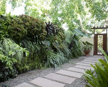 Living Wall, Concrete Paver Walkway Swimming Pool Amelia B. Lima & Associates San Diego, CA