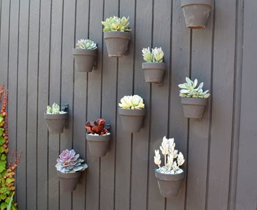 Cover the Wall with Plants