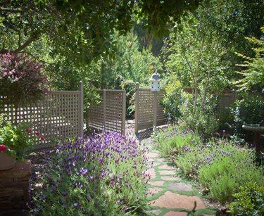 xeriscape garden in bloom