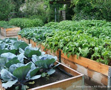 toronto kitchen, garden