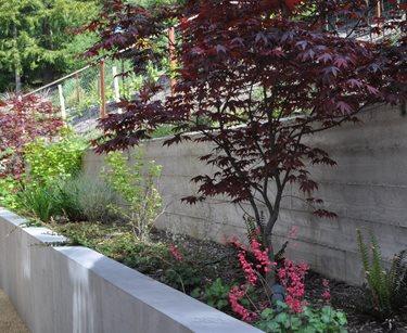 Board Formed Concrete, Retaining Wall Huettl Landscape Architecture Walnut Creek, CA