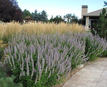 massed xeriscape plants
