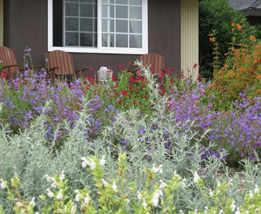 native xeriscape plants