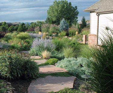 xeriscape garden plants