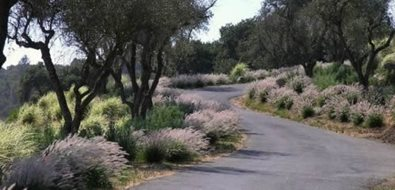 Mediterranean Landscaping Michelle Derviss Landscape Design Novato, CA