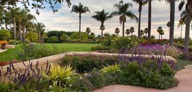 Stone Wall, Blooming Plants, Palm Trees Garden Design Down to Earth Landscapes Santa Barbara, CA