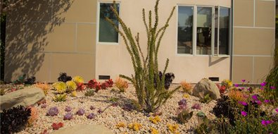 front yard with plants asian landscaping landscaping network calimesa ca