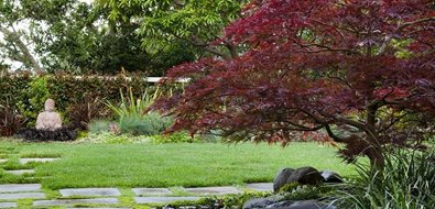 Asian Garden, Buddha, Japanese Maple Tropical Landscaping Shepard Design Landscape Architecture Greenbrae, CA