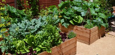 Vegetable Garden Landscaping Network Calimesa, CA
