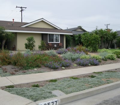 front yard native plants